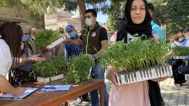 Tirede kadınlara 14 bin domates fidesi dağıtıldı