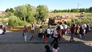 Van'da inci kefali göçü devam ediyor