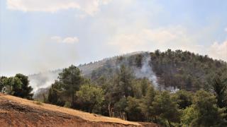 Şanlıurfa'da çıkan örtü yangını kontrol altına alındı