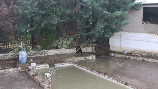 Adanada sağanak nedeniyle zarar gören tarım alanlarında hasar tespiti yapılıyor