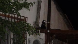 Sakarya'da çatıdaki keçi operasyonu renkli görüntülere sahne oldu