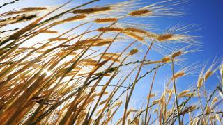 Avrupa'nın organik tarım ürünlerinin yüzde 7'sini Türkiye sağlıyor