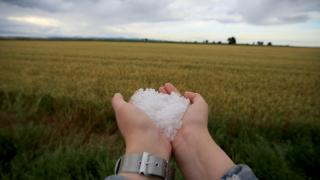 Kırklareli'nde dolu: tarım alanları zarar gördü
