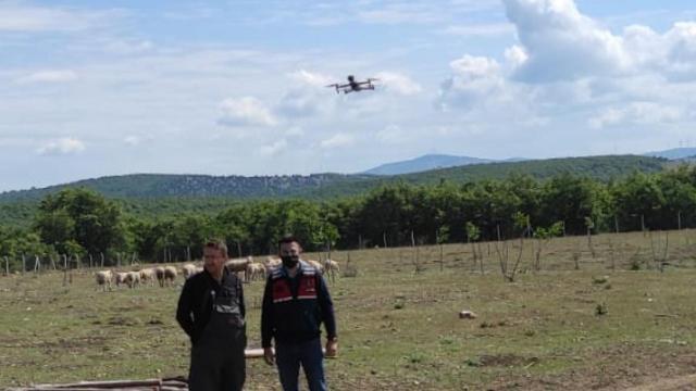 Kaybolan koyunlar dronla bulundu