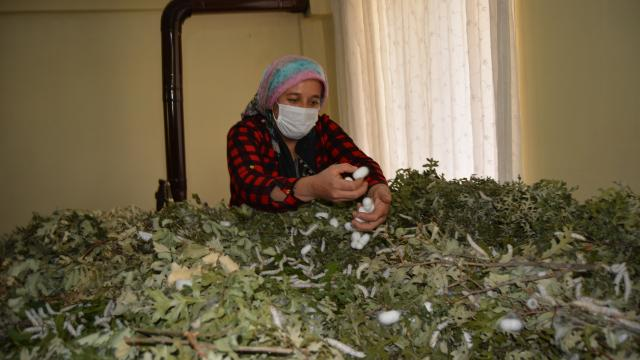 Gaziantepli ev hanımı devlet desteğiyle ipek böceği yetiştiricisi oldu