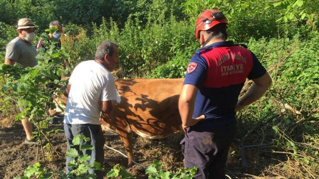 Zonguldakta uçuruma yuvarlanan inek vinç yardımıyla kurtarıldı