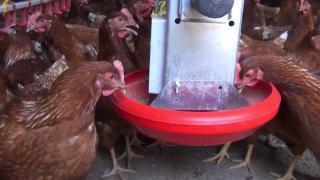 Okulun bahçesinde tavuk kümesi kuruldu
