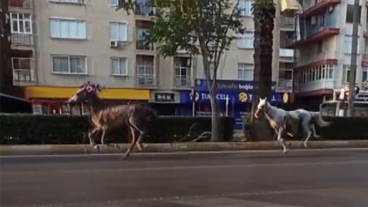 Başıboş atlar caddeye çıktı