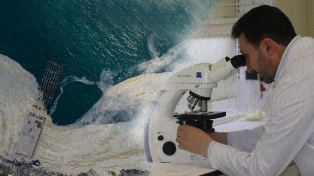 Müsilajda mikroalg florası tespiti