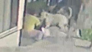 İstanbul'da pitbull dehşeti