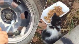 Yavru kedi tekerlek sökülerek kurtarıldı