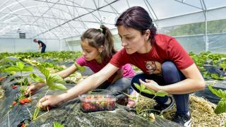TİKA'nın Gürcistan'da sosyal merkez bünyesinde kurduğu sera ilk meyvelerini verdi