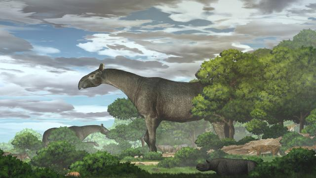 """Çinde zürafadan daha uzun """"gergedan"""" fosili bulundu"""