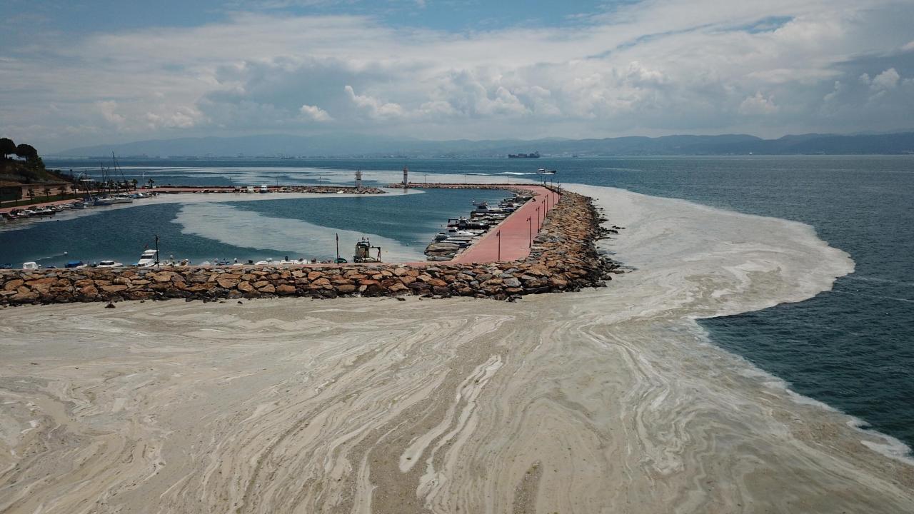 Darıca sahilleri müsilajla kaplandı
