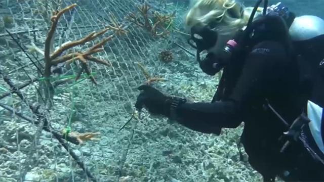 Müsilaja karşı yapay resif formülü