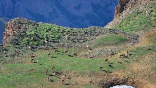 Huzura kavuşan Tunceli'nin doğal güzellikleri göz kamaştırıyor