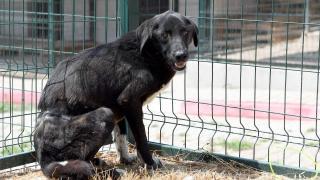Mersin'de belinden çelik telle ağaca bağlı bulunan köpek tedavi altına alındı