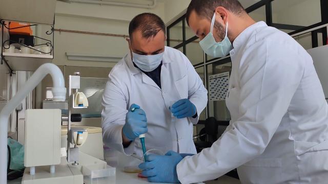Yerli bakteri projesi İngiliz Kraliyet Ödülü getirdi