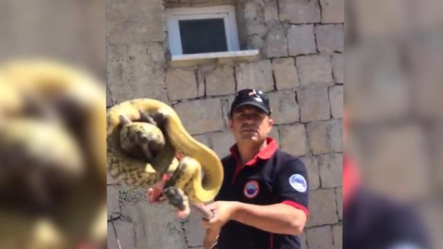 Büyükşehir itfaiyesi yılan timi: 3 metrelik yılan yakaladı