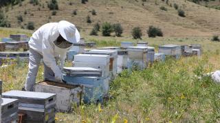 Muş'lu arıcılar: 2 bin 700 kilo bal hasadı bekliyoruz