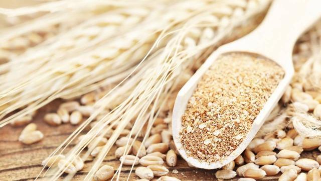 Türkiyenin ilk tescilli siyez buğdayları üretilecek