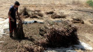 Gazze'de tarım ihracatına engelin zararı 16 milyon dolar