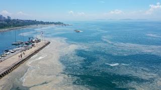 Marmara'da toplanan müsilaj miktarı 5 bin metreküpe yaklaştı