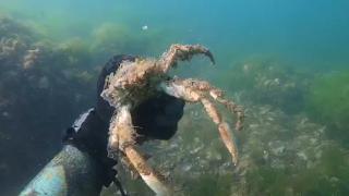 Deniz altındaki müsilaj tahribatı görüntülendi