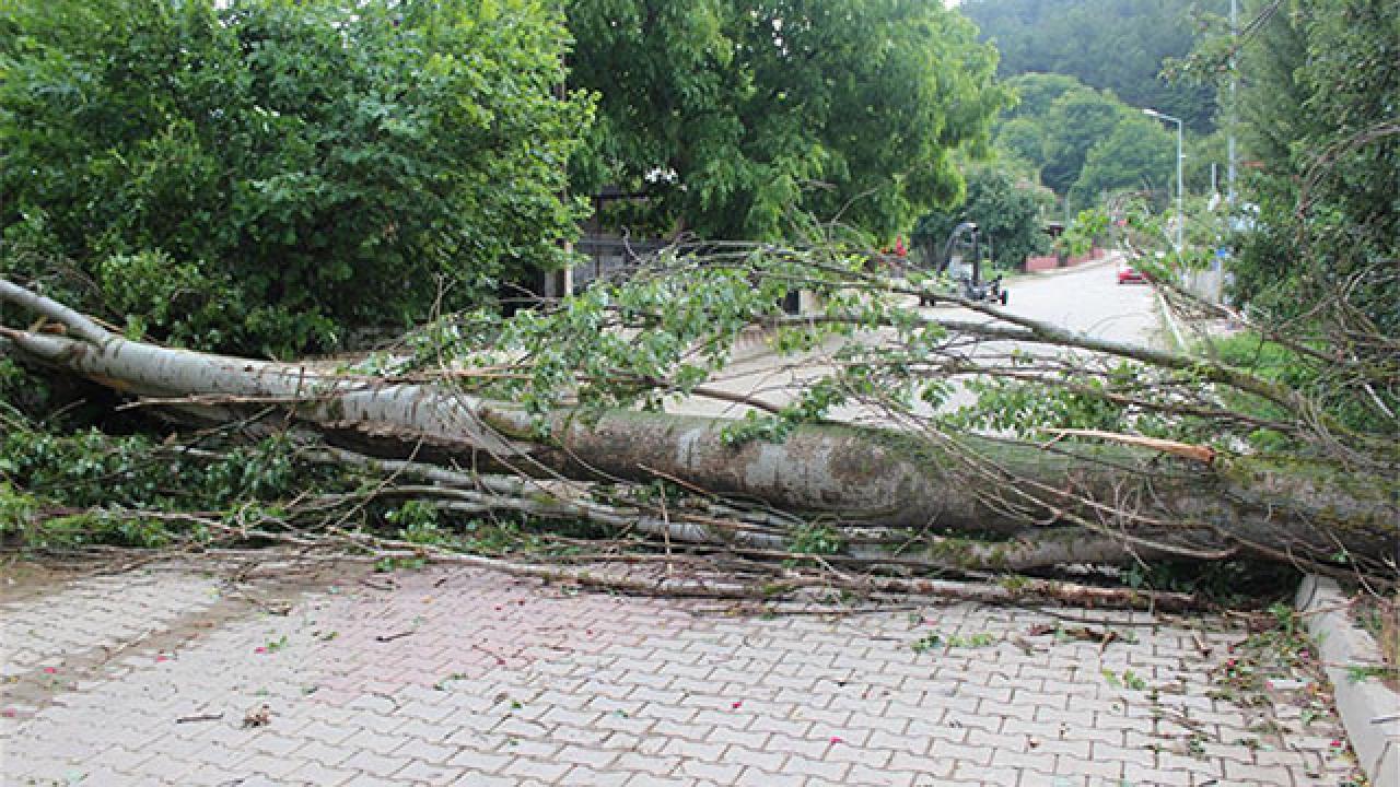 Ege'de fırtına: Çatılar uçtu, ağaçlar devrildi