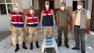 Diyarbakır'da bir kanadı olmayan yaralı baykuş tedavi altına alındı