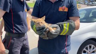 Yavru kedi sürücülerin dikkatiyle kurtarıldı