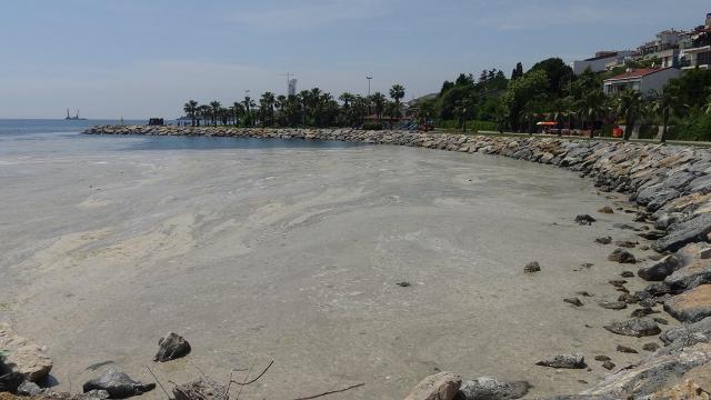 Darıcada sahil müsilajla kaplandı, denize girmek yasaklandı