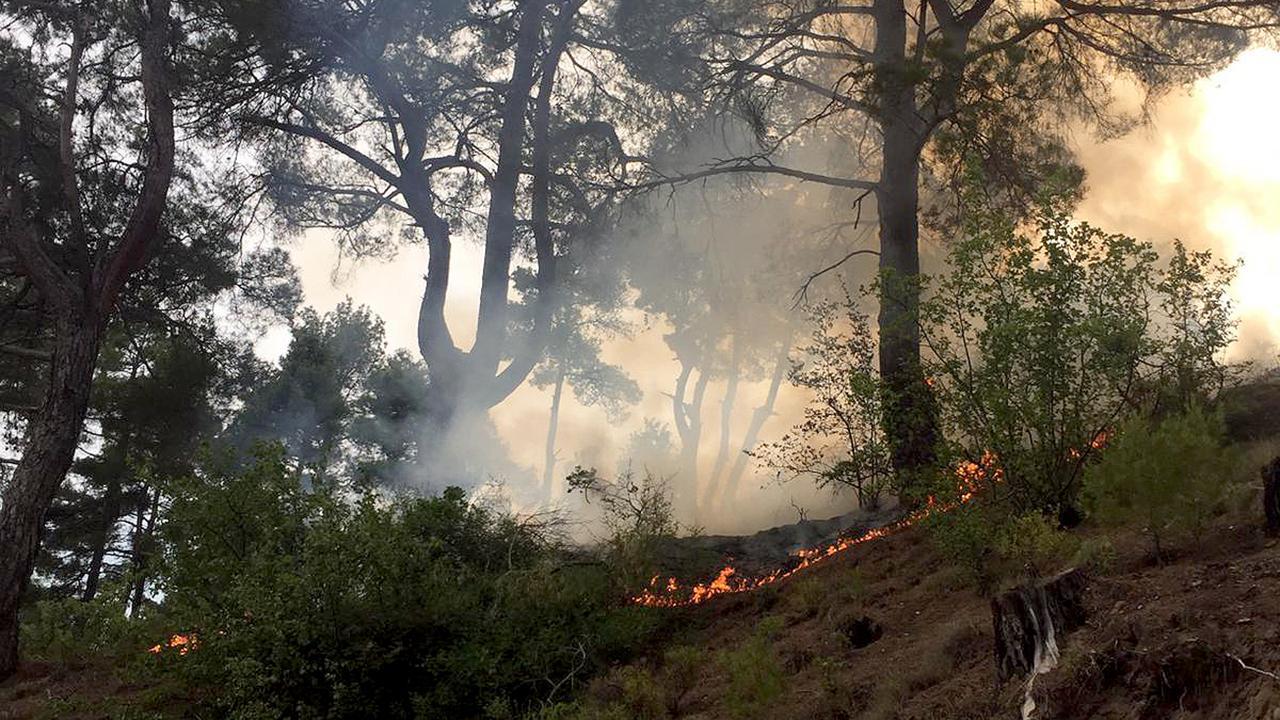 Yıldırım düşmesi 13 günde 48 orman yangınına sebep oldu