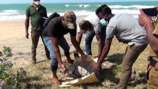 Sri Lanka'daki çevre felaketi büyüyor