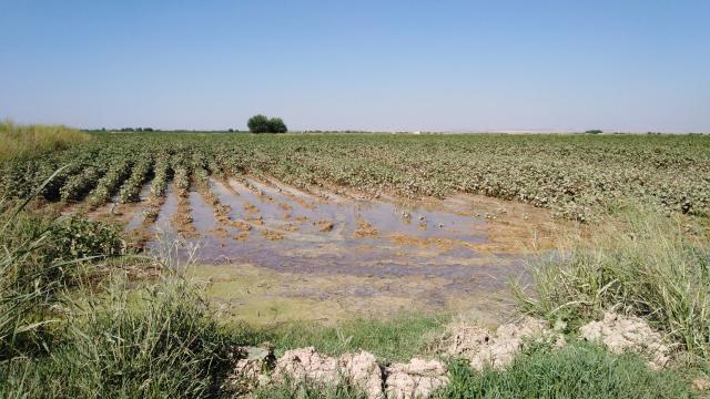 Vahşi sulama ürün, toprak ve doğal kaynaklara zararlı