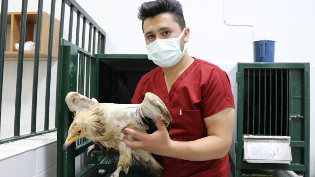 Elazığda yaralı bulunan akbaba tedavi altına alındı