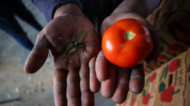 İsrailden Gazzeli çiftçi ve tüccarlara yeni şart