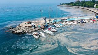 Caddebostan ve Bostancı sahillerinde müsilaj yoğunluğu