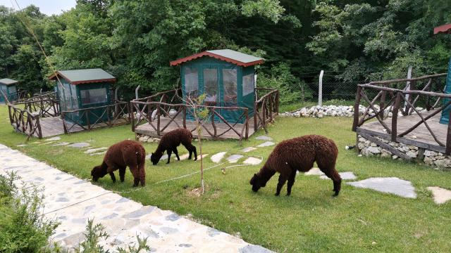 Silivride bir çiftliğe yapılan operasyonda yurda kaçak yollarla getirilen hayvanlar ele geçirildi