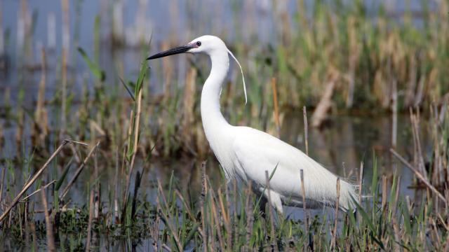 Kuşlar Ağrı Dağı Milli Parkına renk katıyor