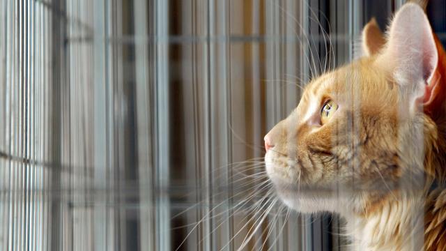 Avustralyanın Melbourne kentinde kedilere sokağa çıkma yasağı getiriliyor