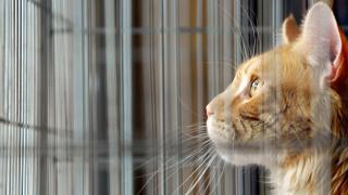 Avustralya'nın Melbourne kentinde kedilere sokağa çıkma yasağı getiriliyor
