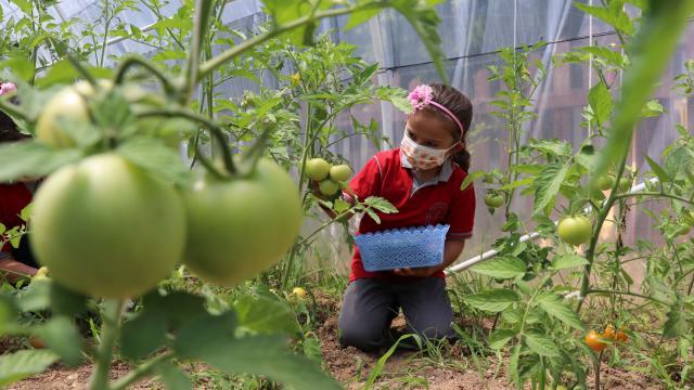 Minik eller okul bahçesinde oluşturulan serada mevsimine göre ürünler yetiştiriyor