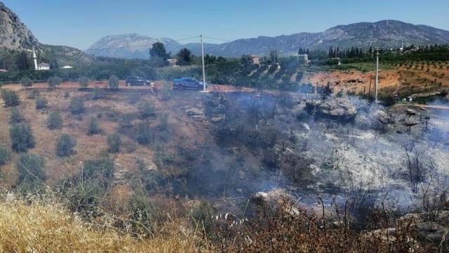 Serikte çıkan yangında zeytin ağaçları ve otomobil zarar gördü