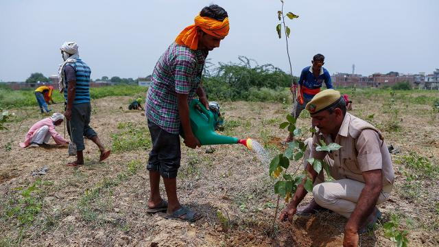 Hindistanda bir günde milyonlarca fidan dikildi