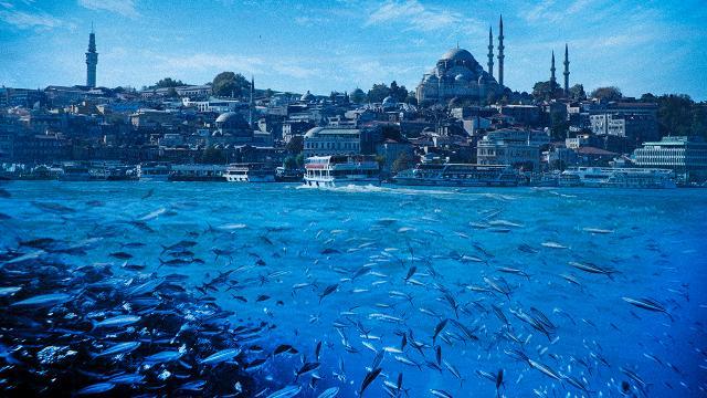Bakan Kurum: Marmarada balık avı kısıtlaması getirilebilir