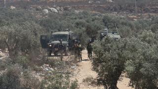 Sivil Yahudi işgalciler Filistinlilere zeytin ağaçlarını itlaf etti