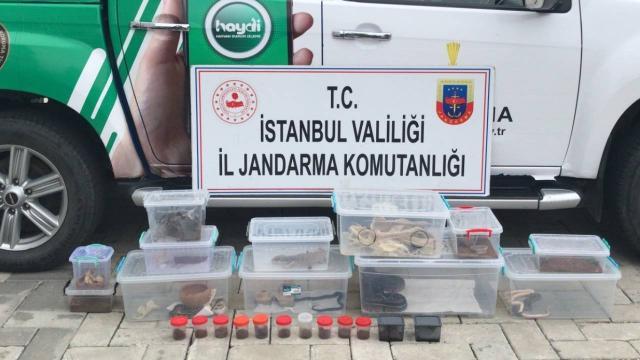 İstanbulda ticareti yasak olan 21 hayvan ele geçirildi