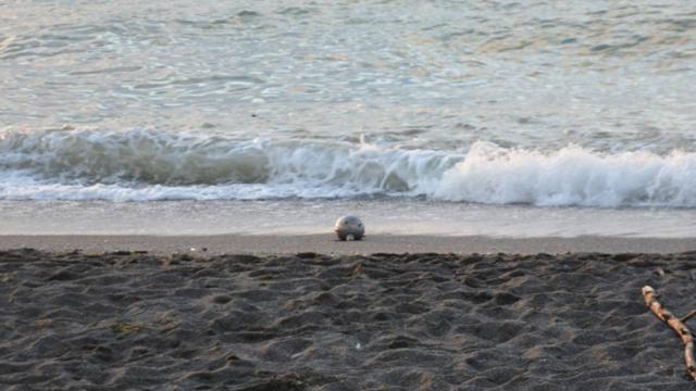 Düzcede deniz mayını tetikleyicisi bulundu