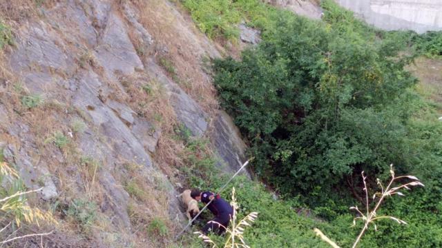 Kocaelide itfaiye ekipleri dikenlerin arasında mahsur kalan köpeği kurtardı